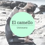 postura del camello